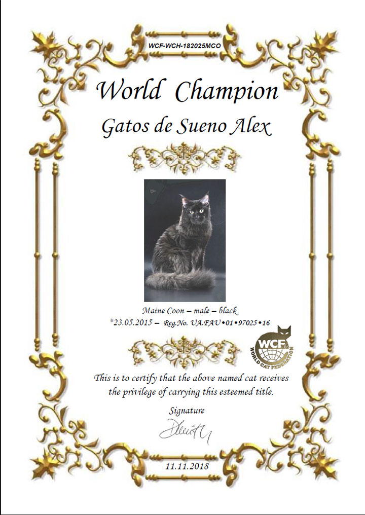 WCH certificate - maine coon