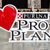 Proplan 1 day 7