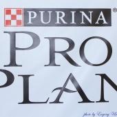 Proplan Final 19