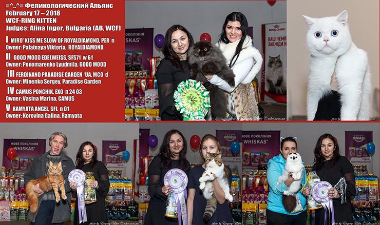 Выставка котов 17-18 февраля, победители